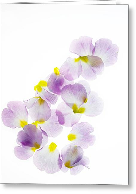 Primroses Photographs Greeting Cards - Primrose Petals 5 Greeting Card by Rebecca Cozart
