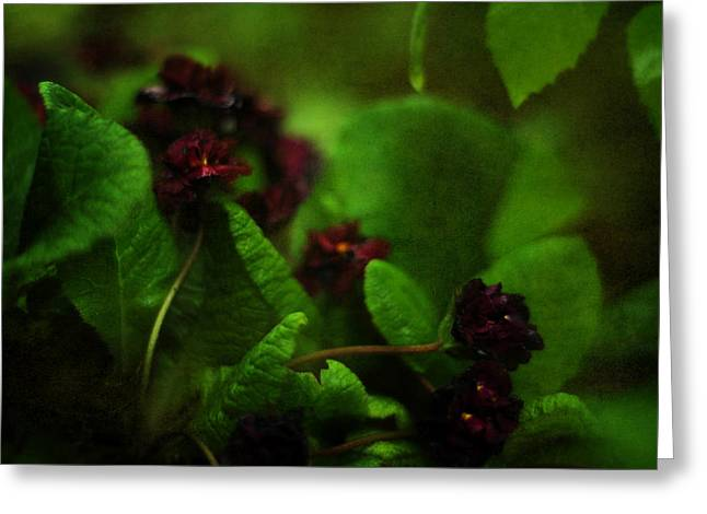 Garnet Greeting Cards - Primula vulgaris Greeting Card by Rebecca Sherman