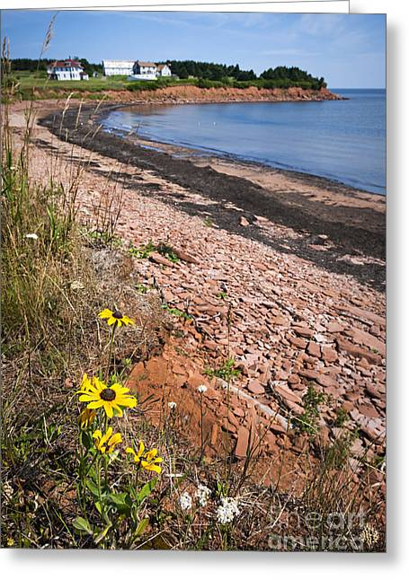 Fishing Village Greeting Cards - Prince Edward Island coastline Greeting Card by Elena Elisseeva