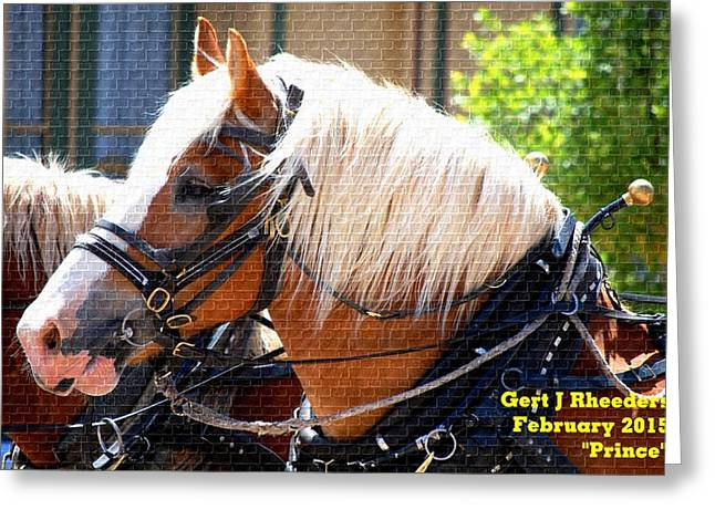 Commercial Photography Paintings Greeting Cards - Prince H a Greeting Card by Gert J Rheeders