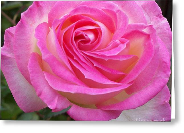 Princess Of Monaco Rose 1 Greeting Card by Geraldine Cote