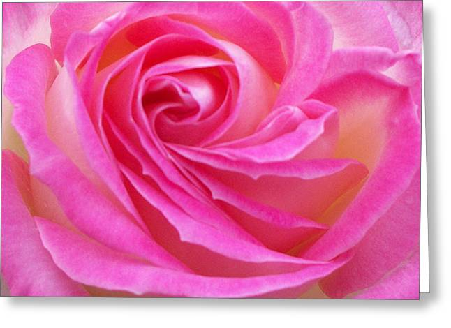 Princess Of Monaco Rose 2 Greeting Card by Geraldine Cote