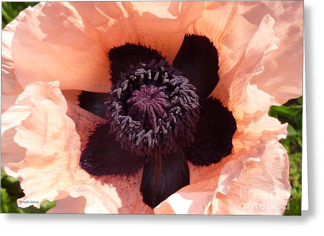 Capsule Greeting Cards - Princess Victoria Louise Poppy Greeting Card by Lingfai Leung