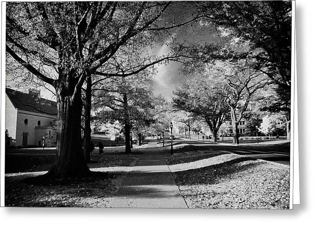 Student Housing Greeting Cards - Princeton University Elm Drive Greeting Card by Nomad Art And  Design
