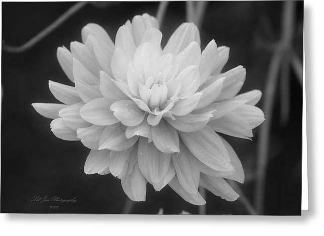 Prissy In Black And White Greeting Card by Jeanette C Landstrom