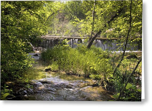 Cindy Rubin Greeting Cards - Pristine Forest Stream Greeting Card by Cindy Rubin