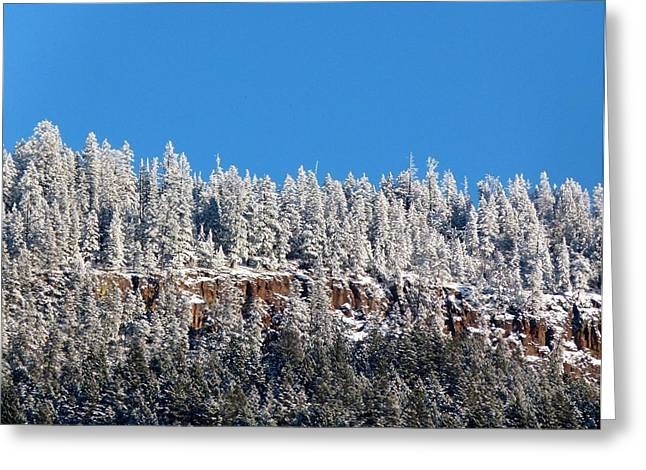 Mountaintop. Trees Greeting Cards - Pristine Mountaintop  Greeting Card by Will Borden