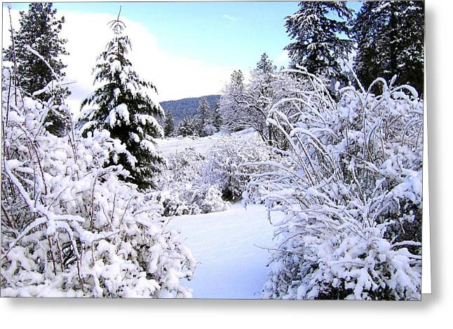 Fir Trees Greeting Cards - Pristine Winter Trail Greeting Card by Will Borden