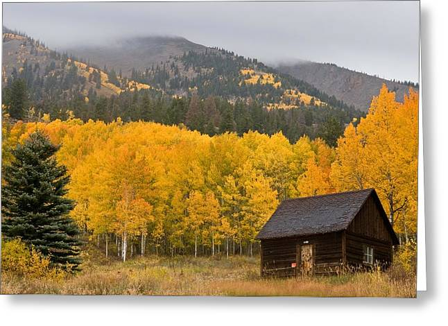 Reserve Greeting Cards - Private Gold On Ohio Pass Greeting Card by Mike Berenson