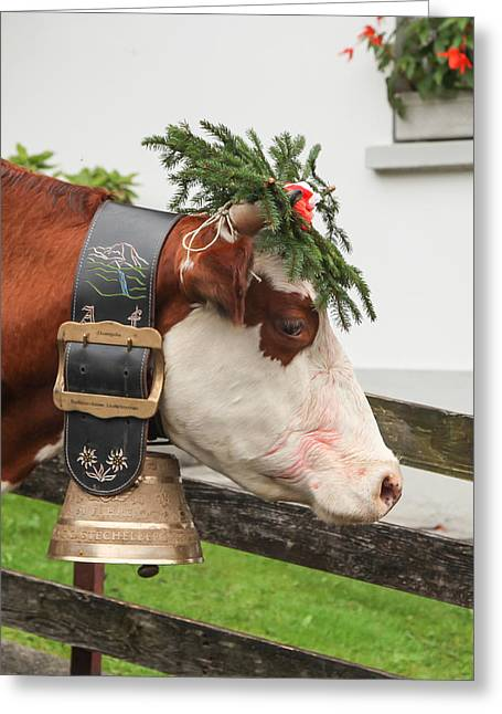 Lauterbrunnen Greeting Cards - Prize Winning Cow 1 Greeting Card by Tom and Pat Cory