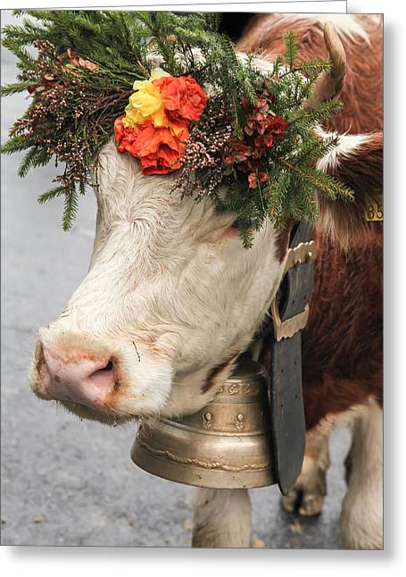 Lauterbrunnen Greeting Cards - Prize Winning Cow 2 Greeting Card by Tom and Pat Cory