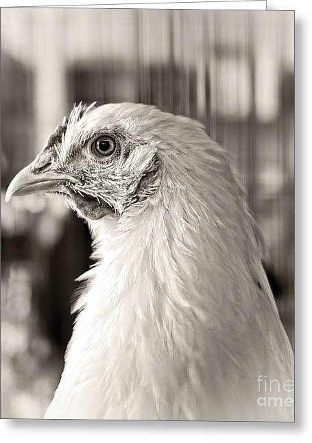 Prized Greeting Cards - Prize Winning Hen Greeting Card by Edward Fielding