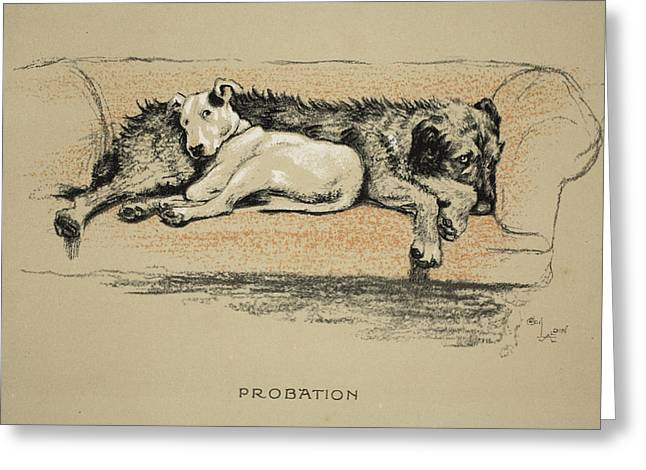 Bull Terrier Greeting Cards - Probation, 1930, 1st Edition Greeting Card by Cecil Charles Windsor Aldin