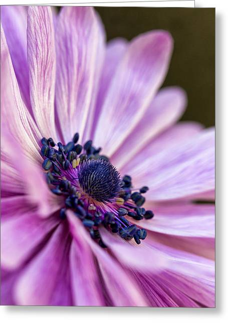 Secret Gardens Greeting Cards - Profile in Pink Greeting Card by Caitlyn  Grasso