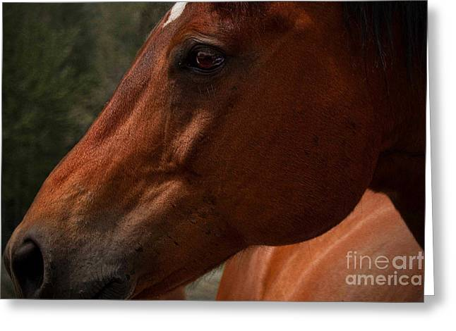 Horse Portrait Photographs Posters Greeting Cards - Profile Greeting Card by K Hines