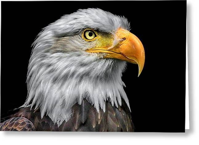 Silver Eye Shadow Greeting Cards - Profile of a Bald Eagle Greeting Card by Adrian Campfield