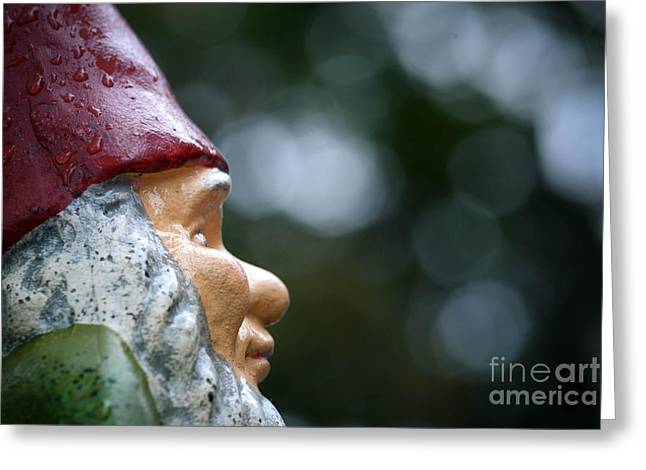 Bokeh Greeting Cards - Profile of a Garden Gnome Greeting Card by Amy Cicconi