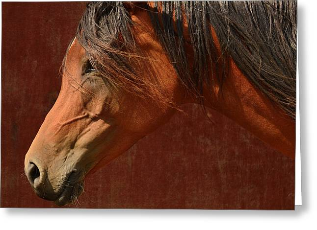Tree Creature Greeting Cards - Profile of a horse. Greeting Card by Toppart Sweden