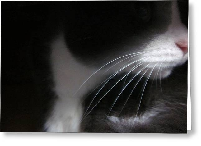 Guy Ricketts Photography Greeting Cards - Profile of Morty Greeting Card by Guy Ricketts