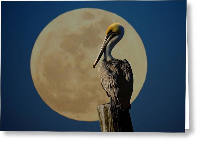 Moon Beach Greeting Cards - Profile Pic Greeting Card by Laura Ragland