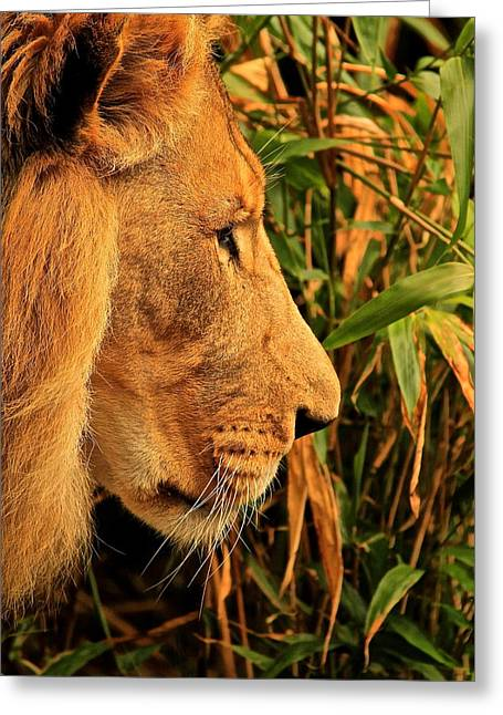Profiles Of A King Greeting Card by Laddie Halupa