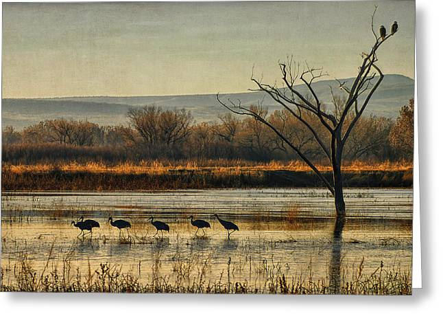 Best Sellers -  - Wildlife Refuge. Greeting Cards - Promenade of the Cranes Greeting Card by Priscilla Burgers
