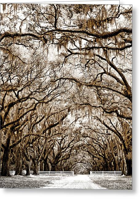Featured Art Greeting Cards - PROMENADE Savannah GA Greeting Card by William Dey