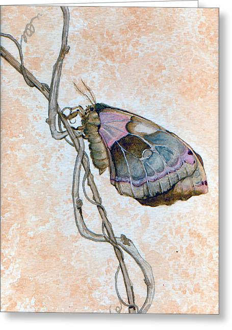 Promethea Moth Greeting Card by Katherine Miller