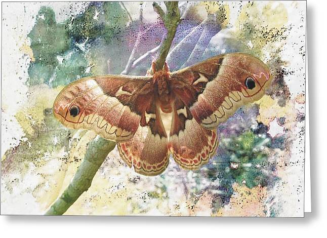 Promethea Greeting Cards - Promethea Silkmoth Greeting Card by Joe Duket