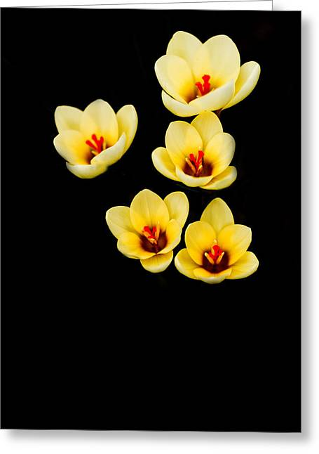 Crocus Greeting Cards - Promise Greeting Card by Rebecca Cozart
