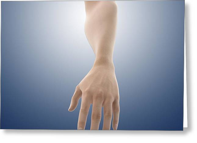 Cut-outs Greeting Cards - Pronation of the forearm, artwork Greeting Card by Science Photo Library