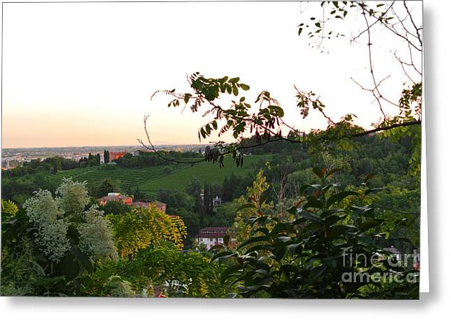 Prosecco Vineyards Greeting Card by Sarah Christian