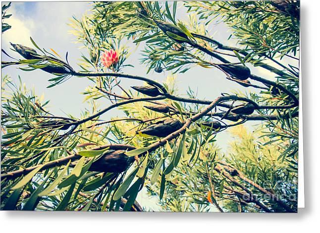 Protea Repens Maui Hawaii Sugarbush Greeting Card by Sharon Mau