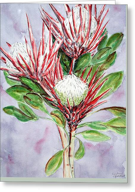 Proteas Greeting Card by Lyndsey Hatchwell