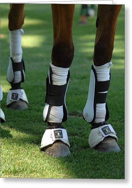 Leggings Greeting Cards - Protection for a Polo Horse Greeting Card by Mountain Dreams