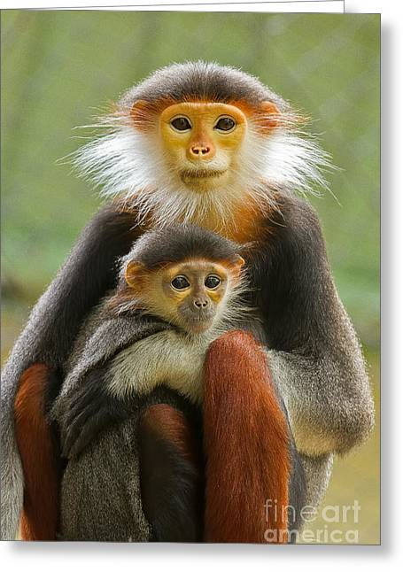Compelling Greeting Cards - Protective Custody Greeting Card by Ashley Vincent