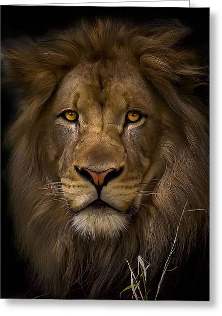 Lioness Greeting Cards - Proud Greeting Card by Cheri McEachin
