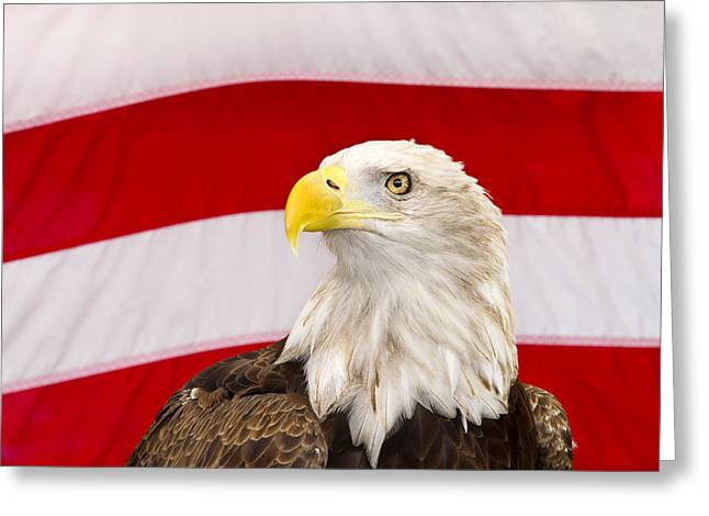 Eagle Feathers Greeting Cards - Proud Eagle Greeting Card by Rebecca Cozart