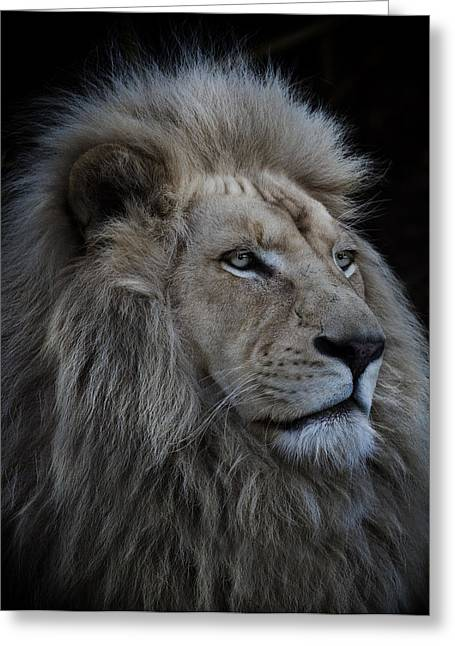 Proud Lion Greeting Card by Louise Wolbers