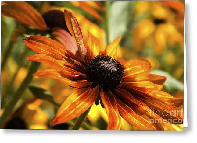 Catherine Greeting Cards - Proud Orange Greeting Card by Catherine Fenner
