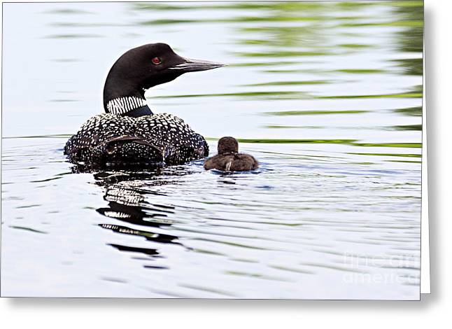 Lhr Images Greeting Cards - Proud Parent Greeting Card by Larry Ricker