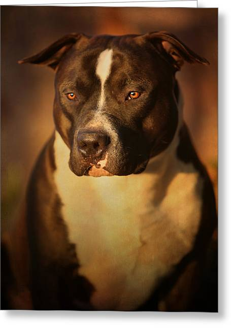 Dog Photographs Greeting Cards - Proud Pit Bull Greeting Card by Larry Marshall
