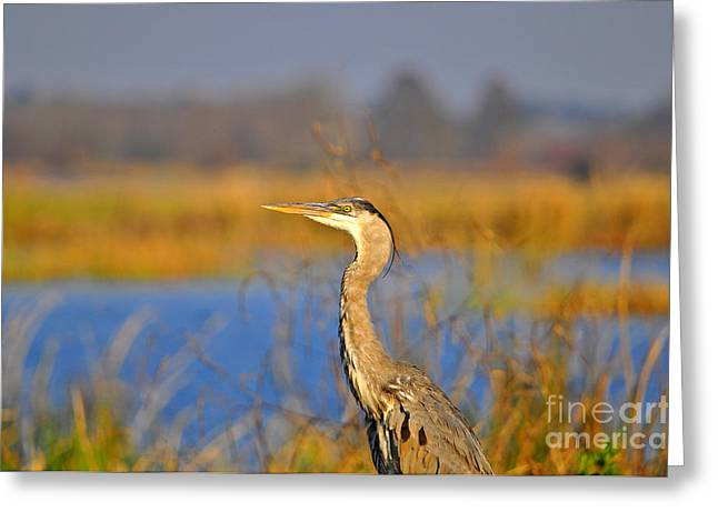 Grey Heron Greeting Cards - Proud Profile Greeting Card by Al Powell Photography USA