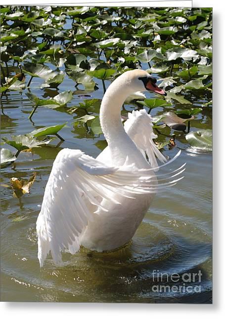 Mute Swan Greeting Cards - Proud Swan Greeting Card by Carol Groenen