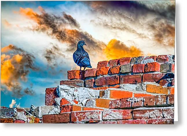 Whimsical. Greeting Cards - Proud To Be A Pigeon Greeting Card by Bob Orsillo