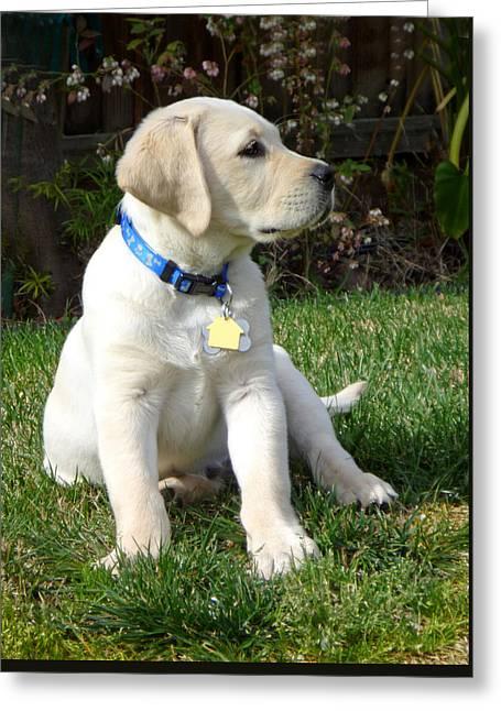 Proud Yellow Labrador Puppy Greeting Card by Irina Sztukowski