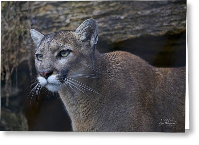 Puma Pictures Greeting Cards - Prowling Puma Greeting Card by Steve and Sharon Smith