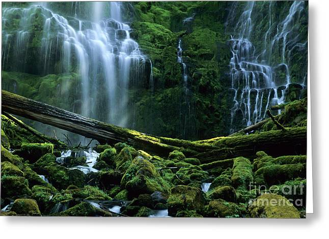 Bob Christopher Greeting Cards - Proxy Falls Greeting Card by Bob Christopher