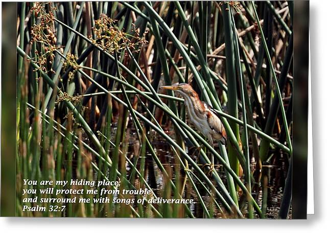 Inspirational Wildlife Prints Greeting Cards - Psalm 32 7 Greeting Card by Dawn Currie