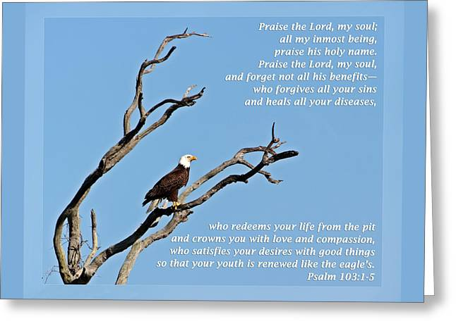 Wildlife Refuge. Greeting Cards - Psalm 103 1-5 Greeting Card by Dawn Currie